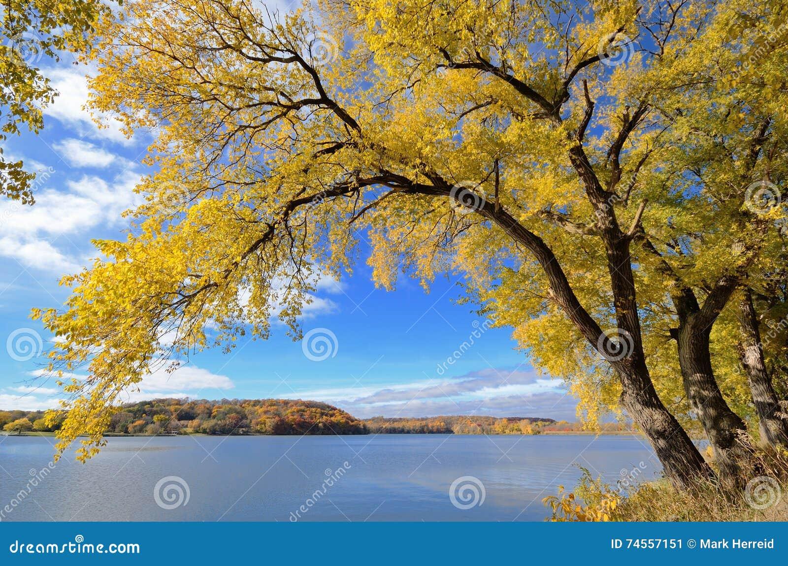 Albero variopinto di autunno