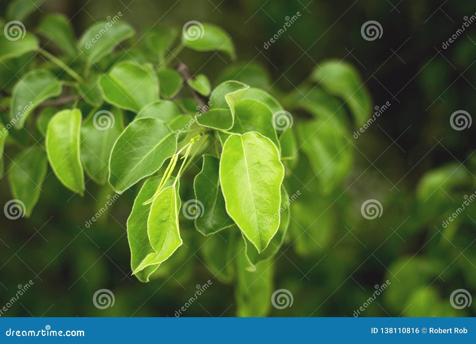 Albero verde intenso in foreste del Caucaso