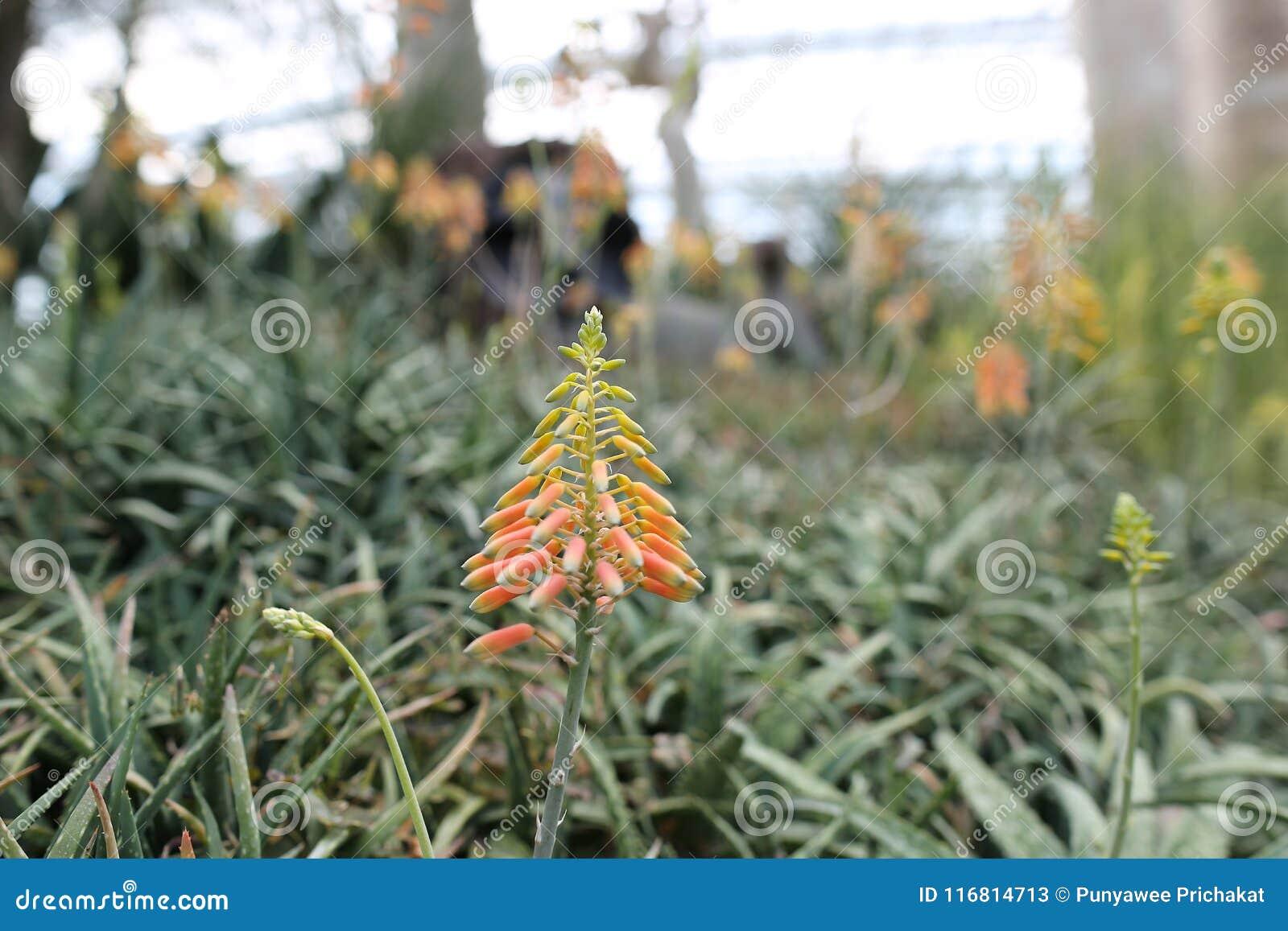 Albero verde su erba