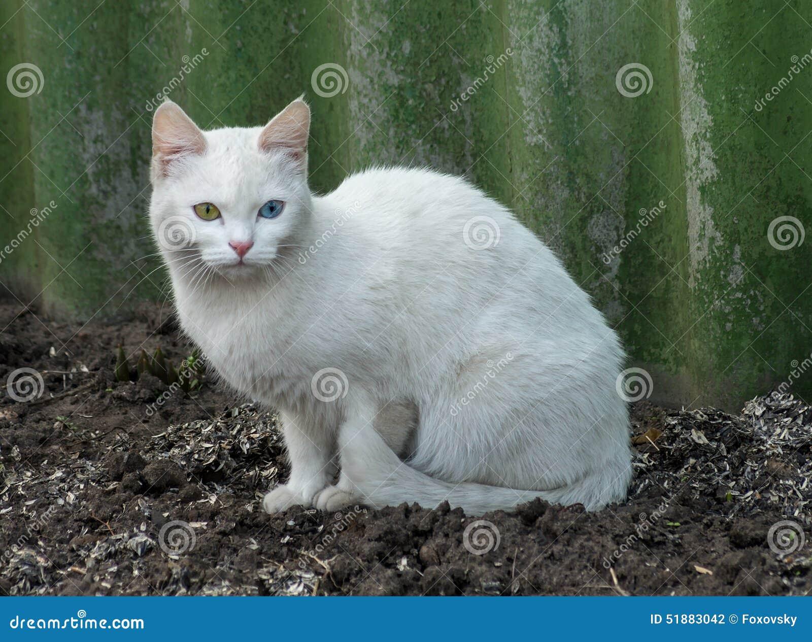 Albino Cat Stockfoto Bild Von Verlassen Haustier Schwarzes 51883042