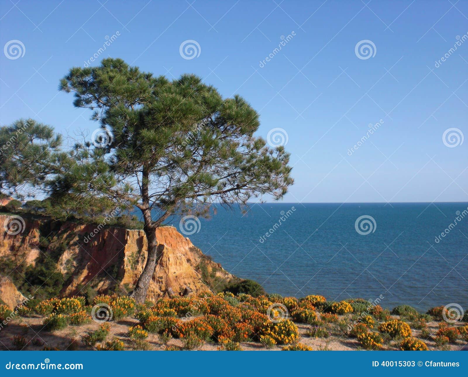 Albufeira nabrzeże