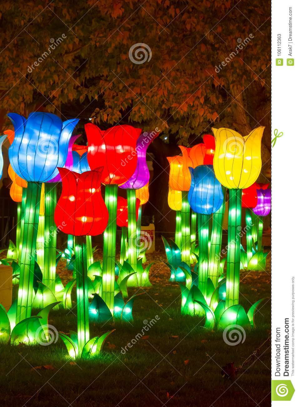 Chinese Lantern Festival New Year New Year Chinese Tulip Editorial