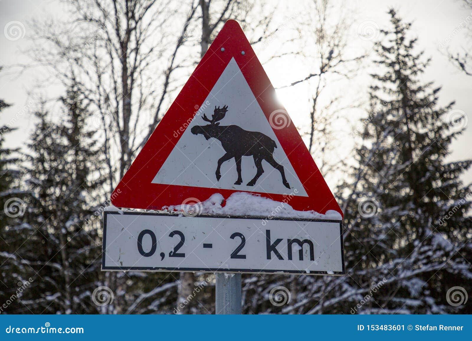 Alces do sinal de estrada