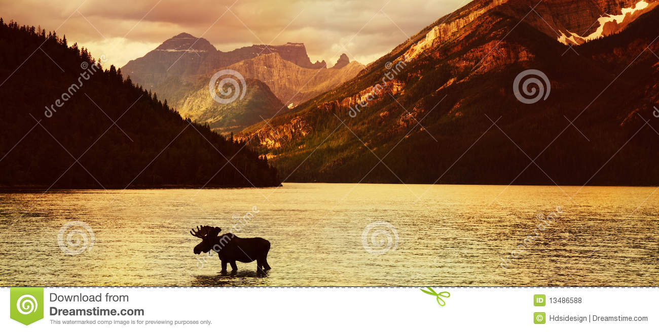 Alces no lago no por do sol
