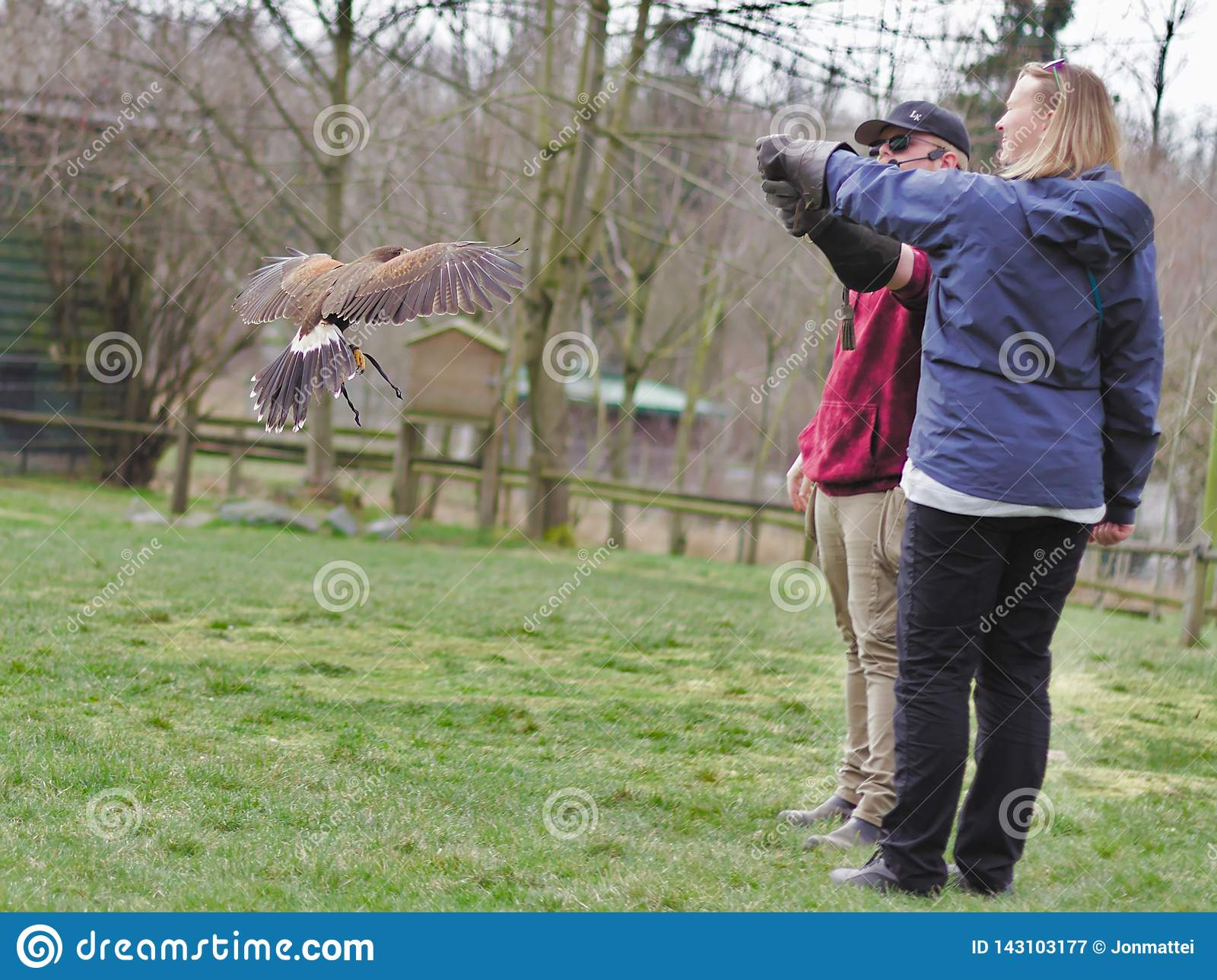 Aldergrove, British Columbia. March 25, 2019 - An Owl Standing on the trainer`s hand in the bird show