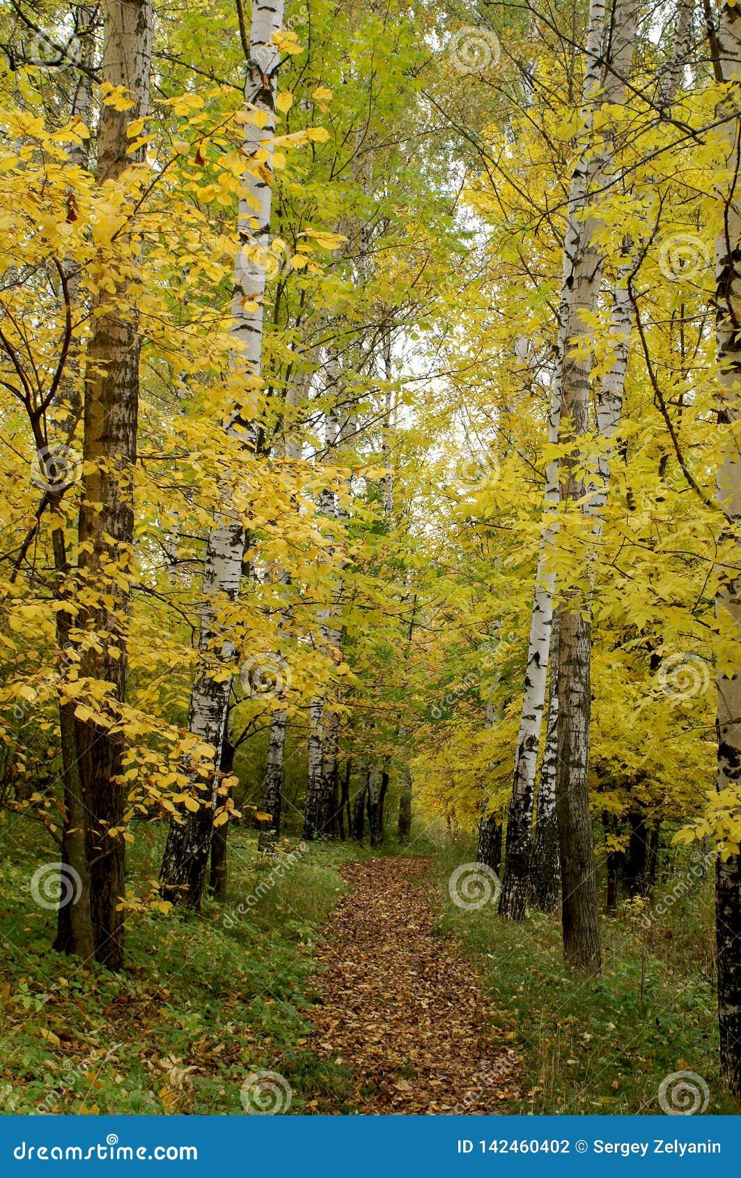 Aleia das árvores de folhas mortas que começam a girar amarelo