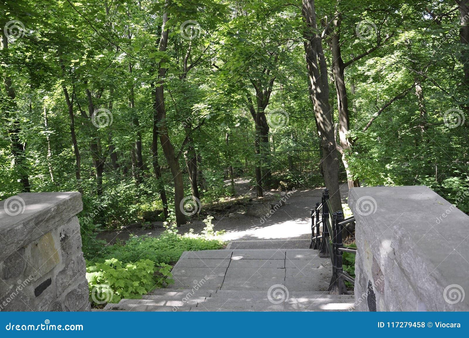 Aleia de pedra das escadas no parque da montagem real de Montreal