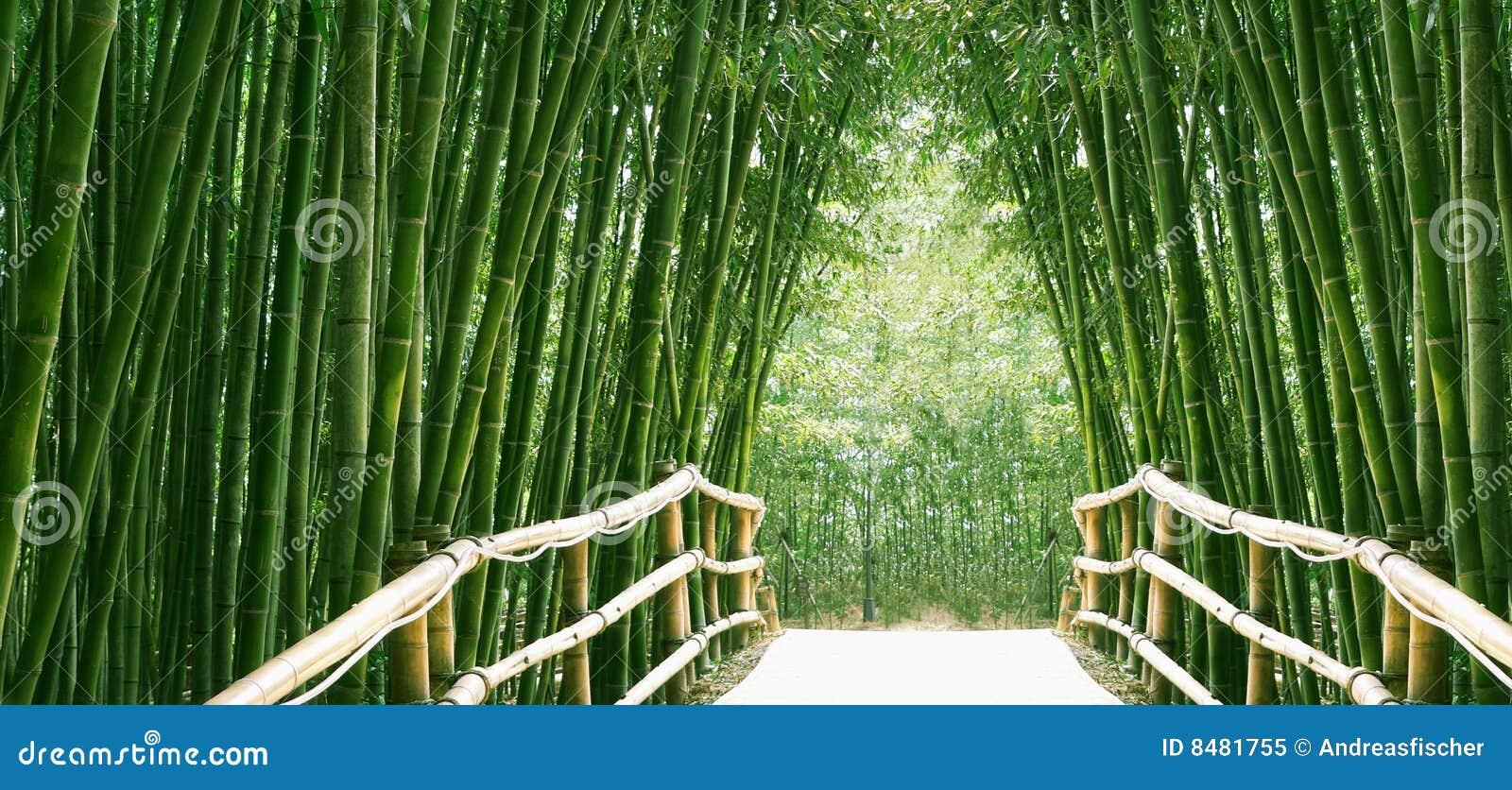 Aleja bambus
