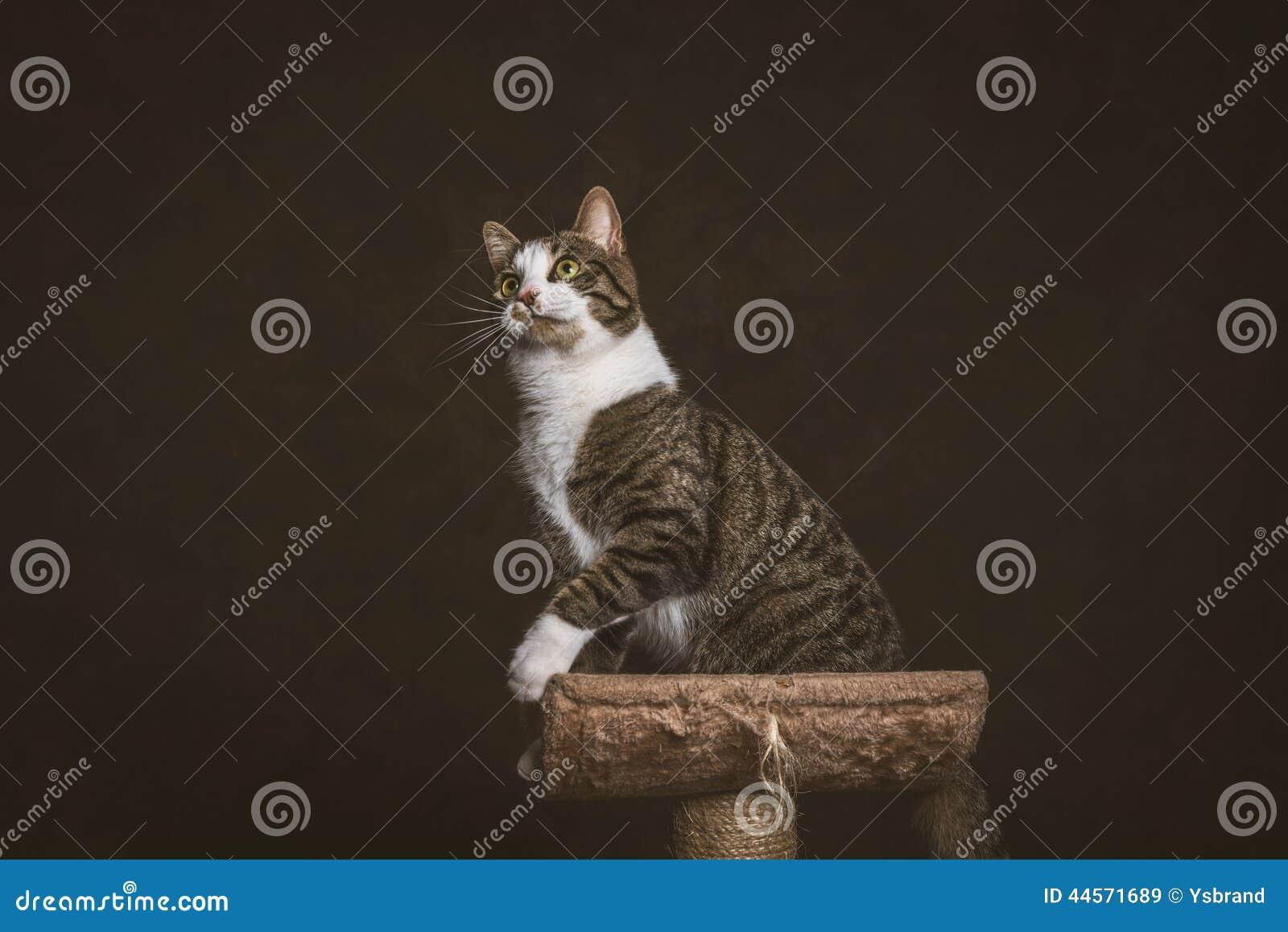 Fabric Cat Scratching Post