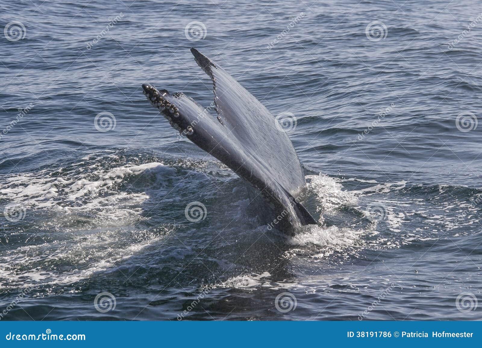 Aleta de cola de una ballena grande