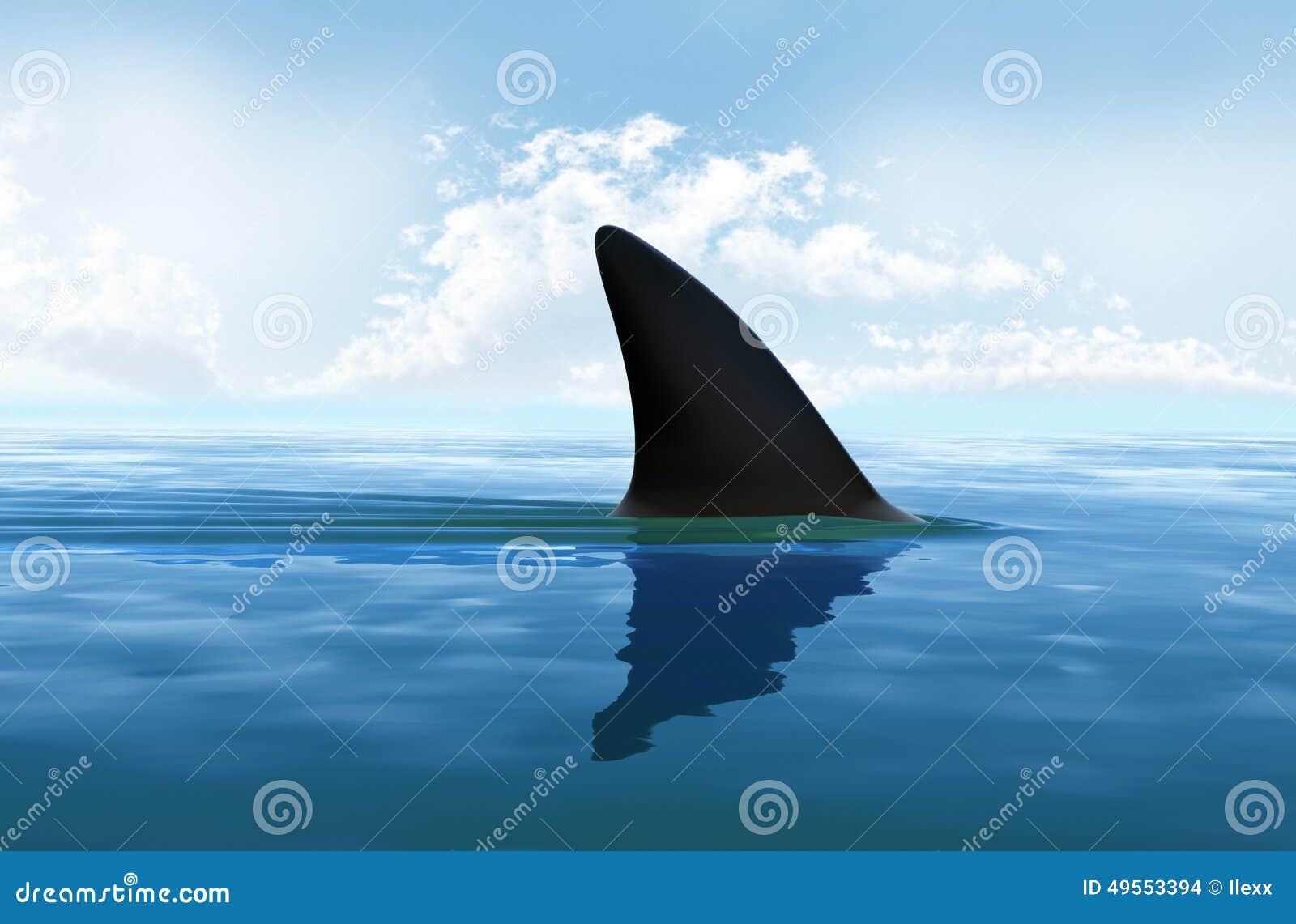 Aleta do tubarão à superfície da àgua