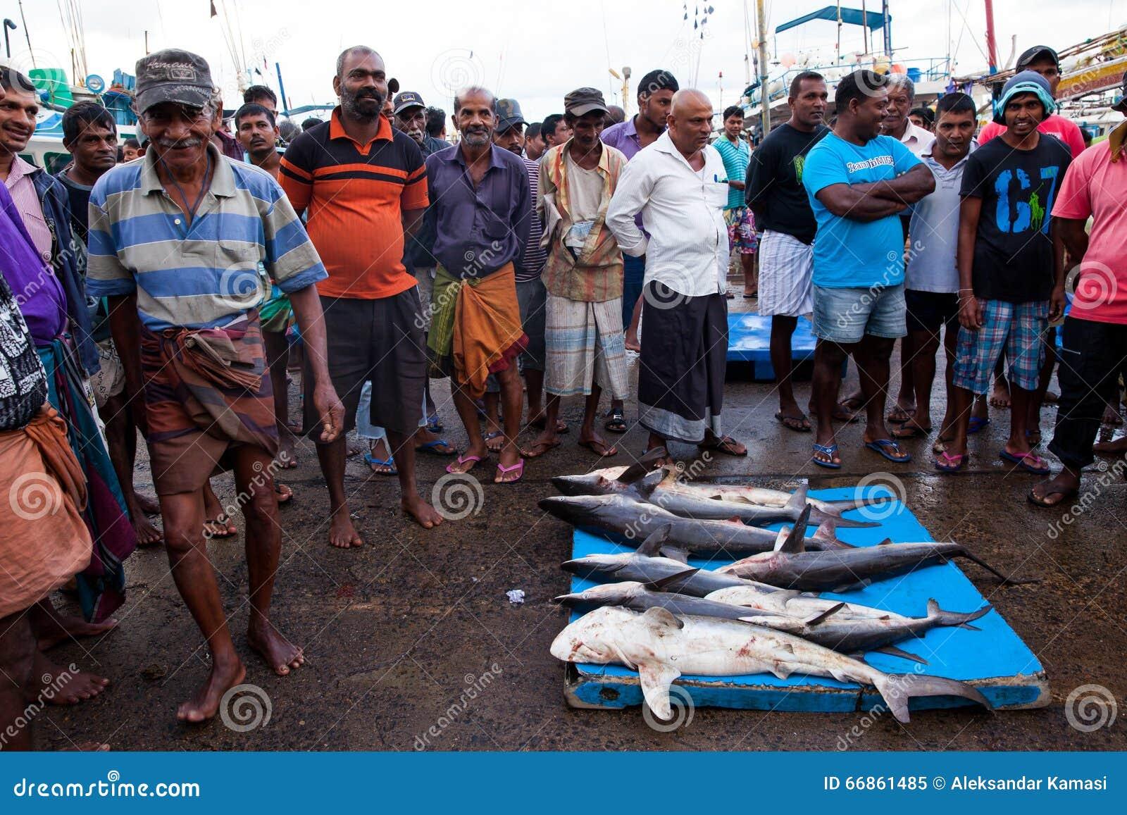 Aleta do tubarão - tubarões inoperantes no mercado de peixes - Beruwela, Sri Lanka