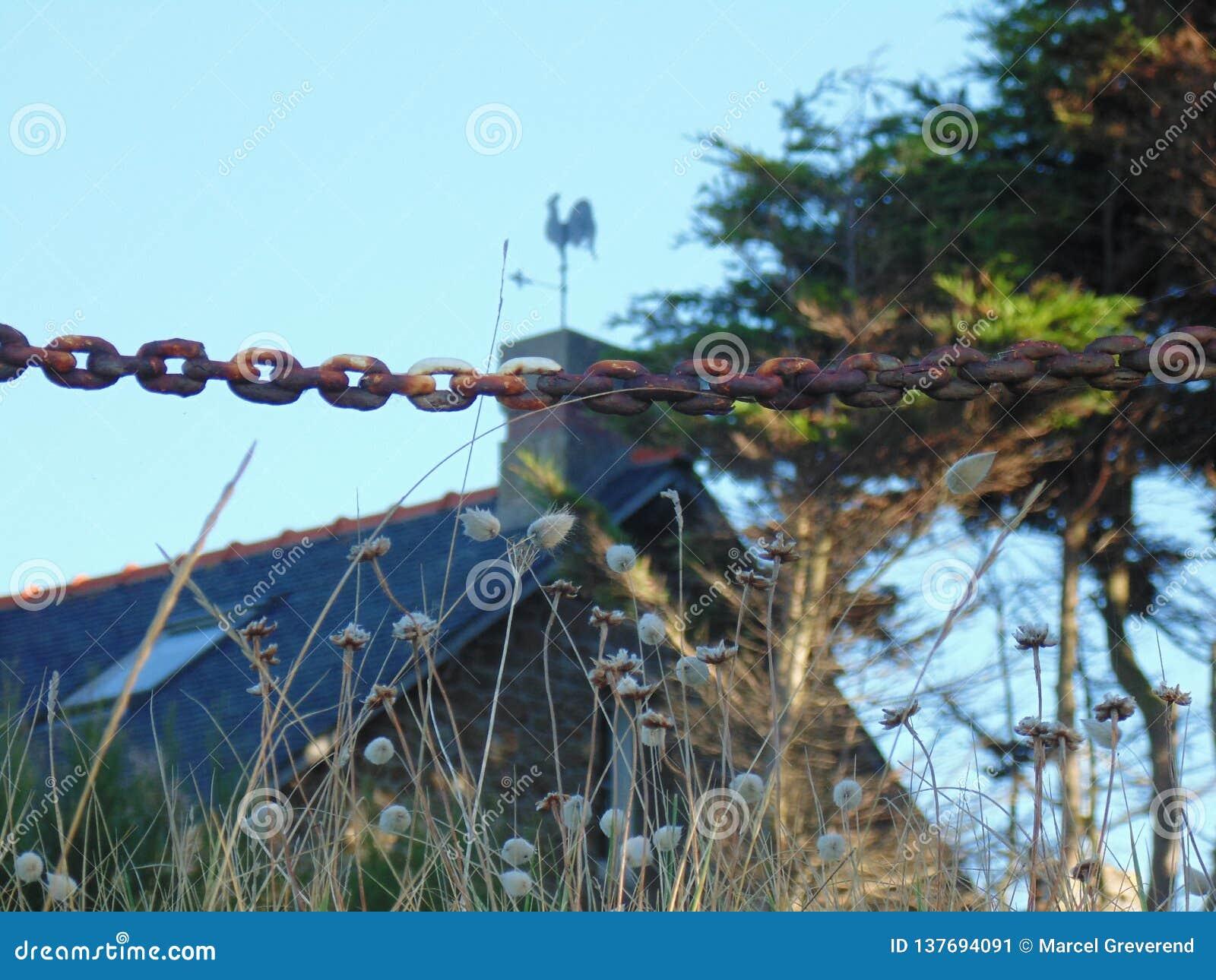 A aleta e a corrente de vento