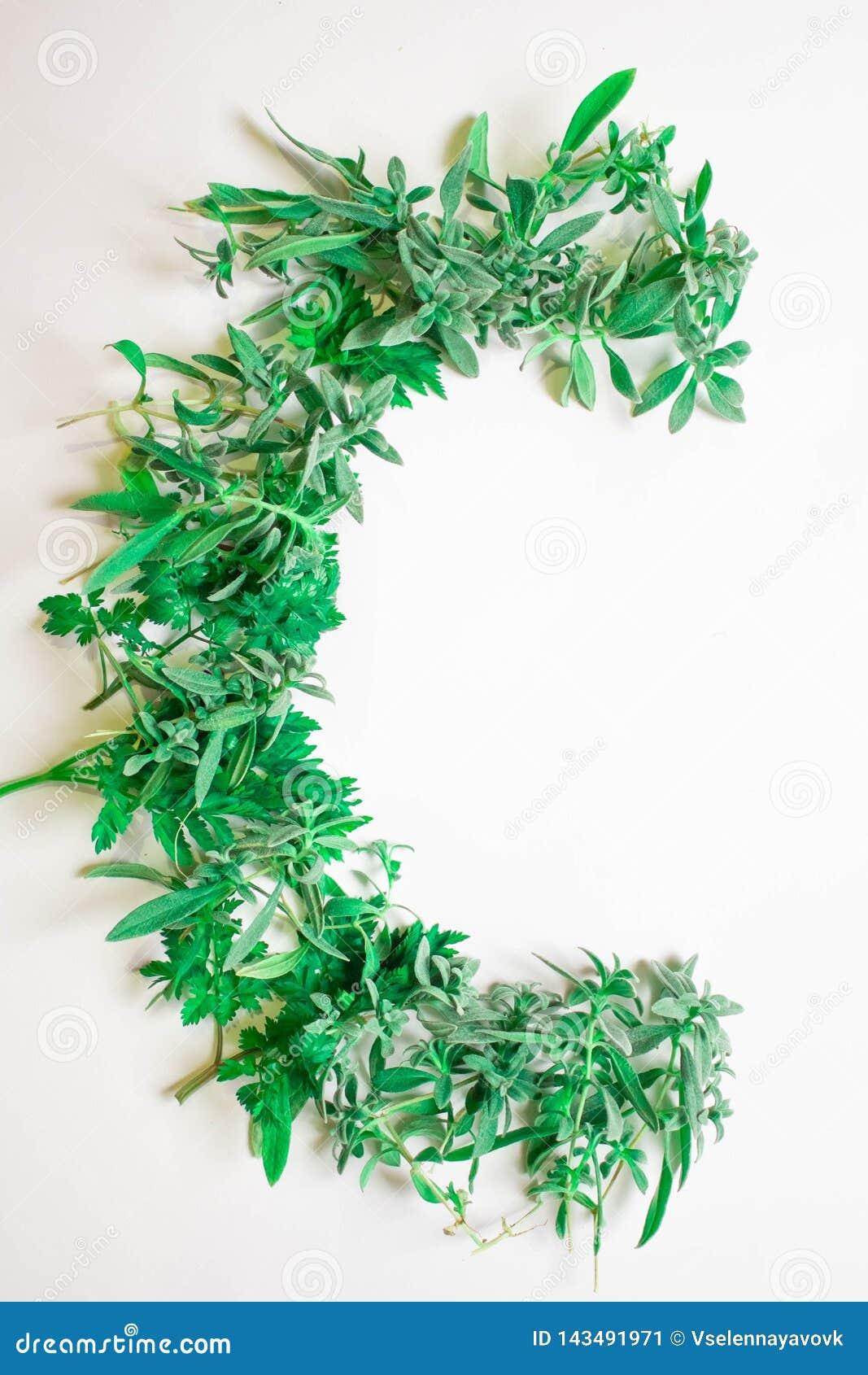 Alfabeto verde de la hierba, de brotes y de hojas Letras estacionales del verano con Letra C de las plantas frescas verdes