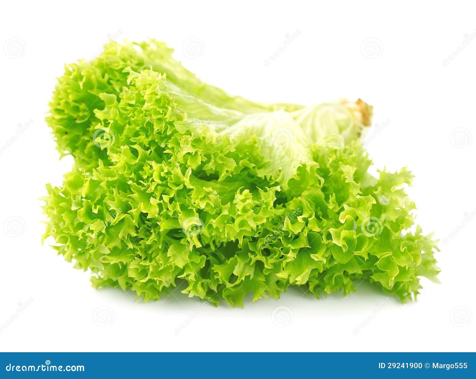 Download Alface da salada foto de stock. Imagem de lush, folha - 29241900