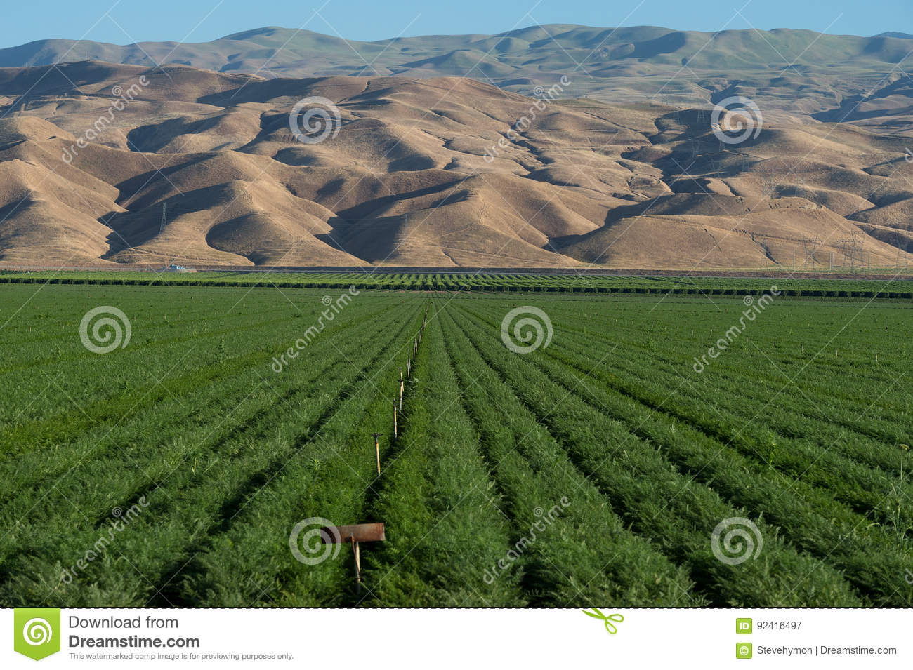 Lush green alfalfa farm field and mountains in Southern California