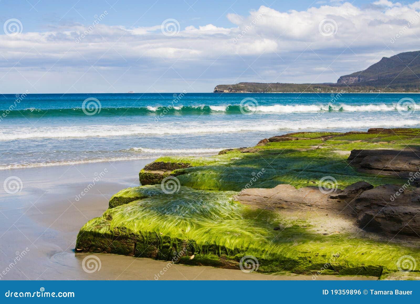 Alga em pavimento tessellated, praia