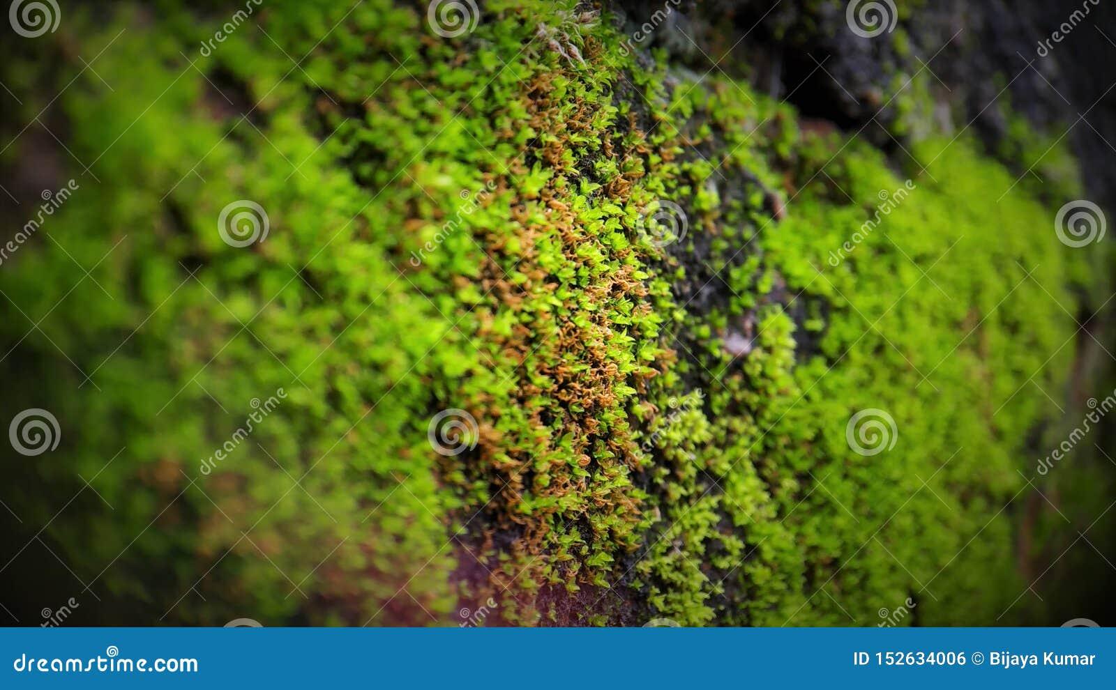 Alga makro- strzał na ścianie z cegieł