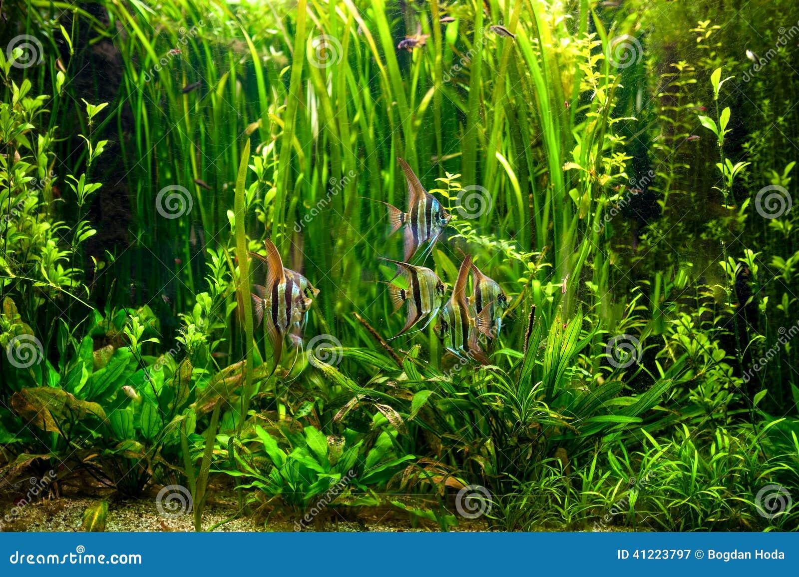how to stop alga in tank