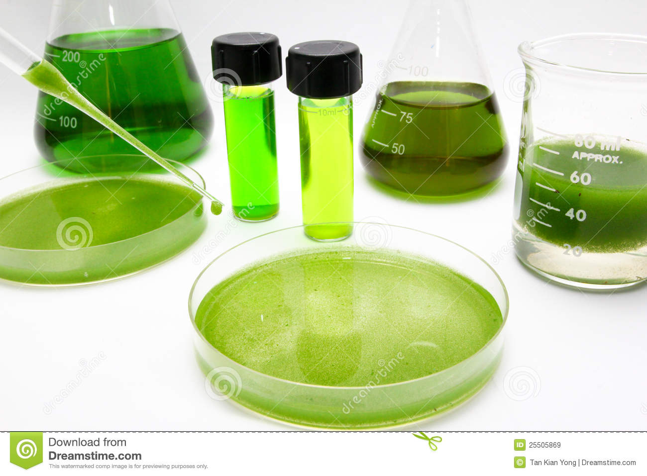 how to produce biodiesel from algae