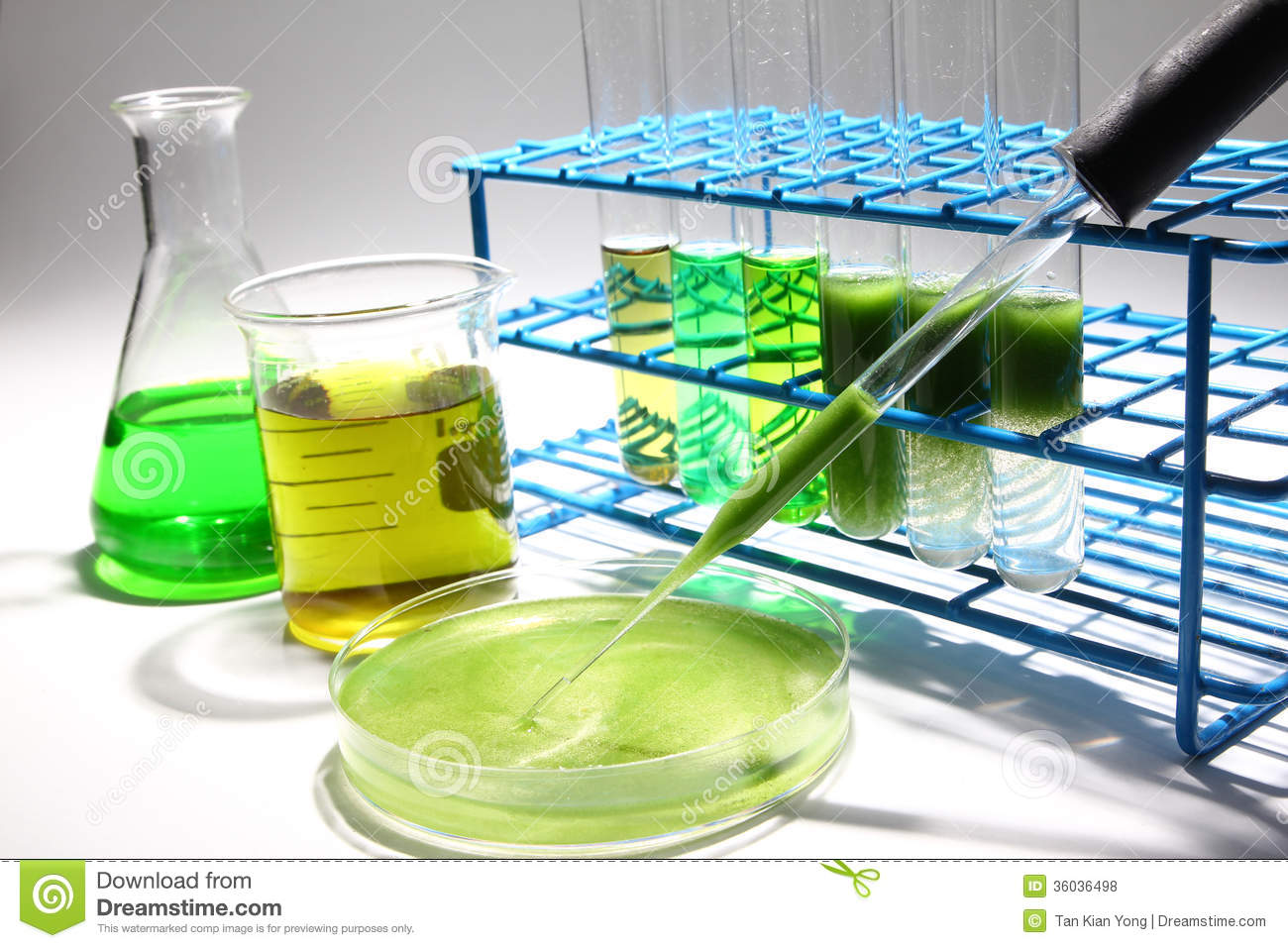 research papers on biodiesel from algae