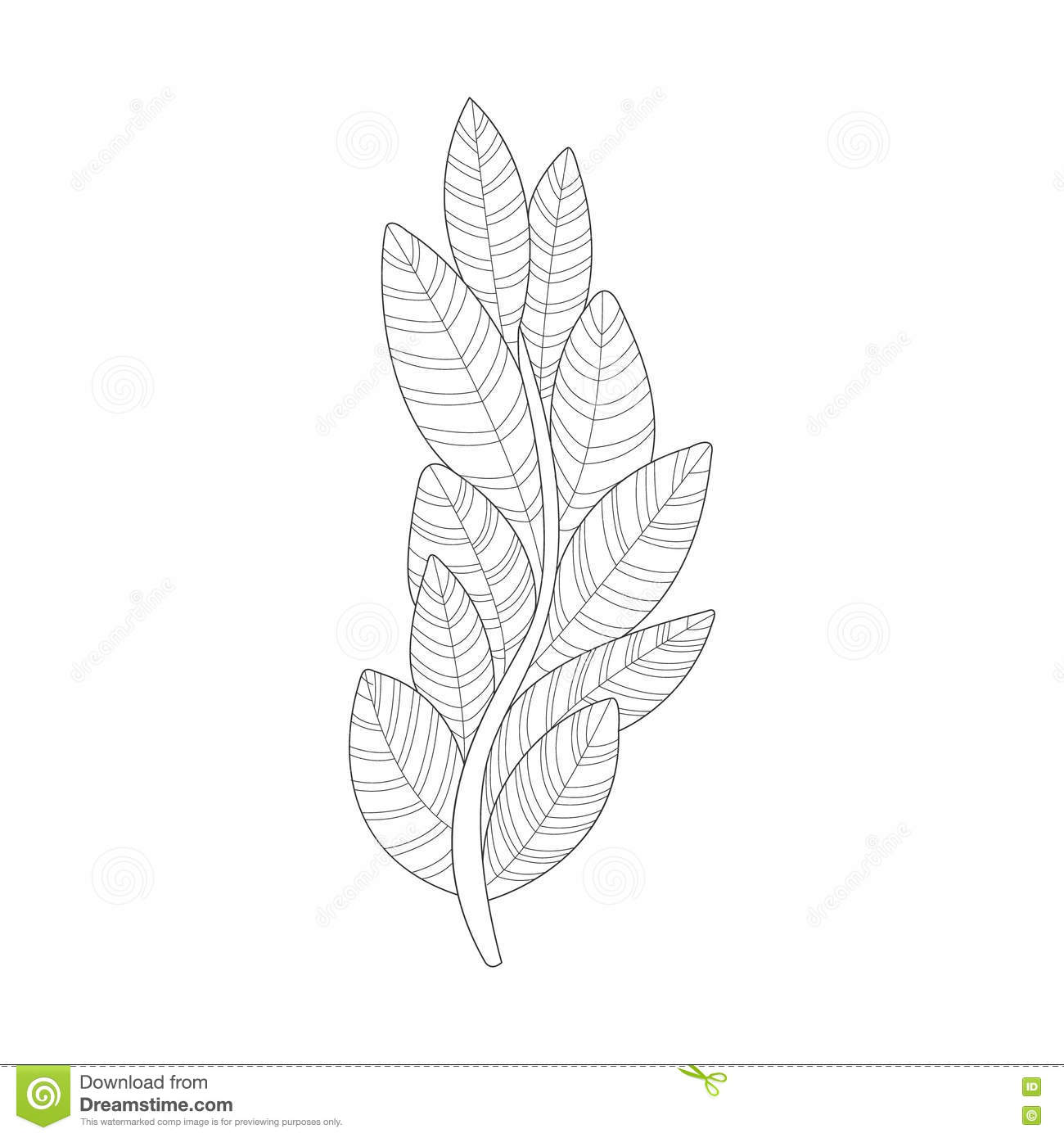 Algae Plant Sea Underwater Nature Adult Black And White Zentangle