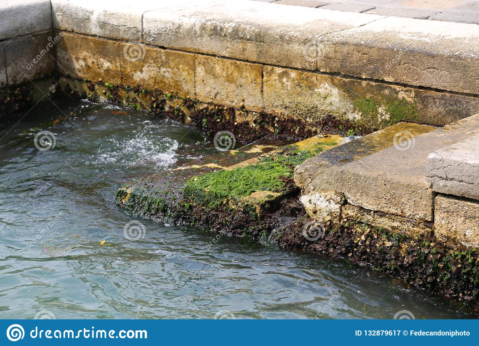 Algae and sea water during high tide in Venice in Italy