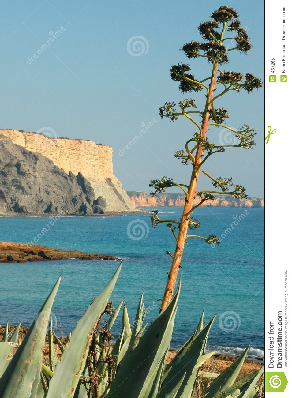 Download Algarve tree stock image. Image of nature, tree, rock, ocean - 467265