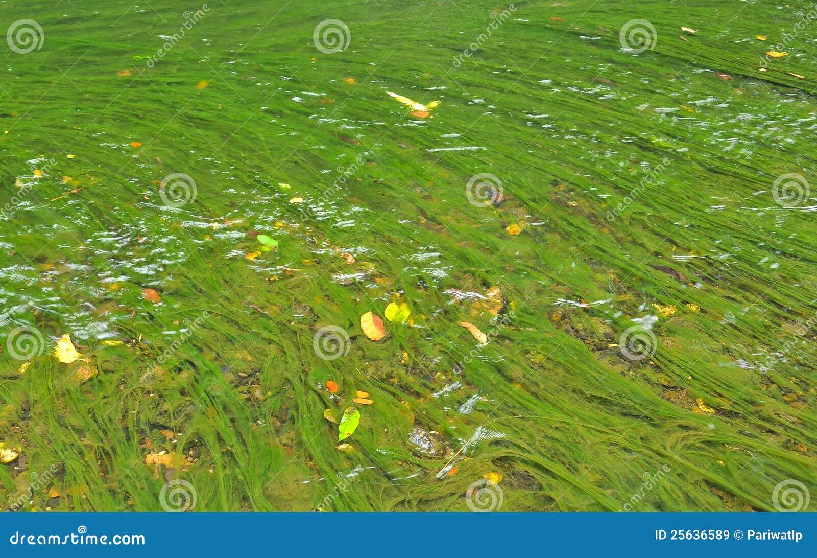 algen im wasser stockbild bild von nave fall exoticism 25636589. Black Bedroom Furniture Sets. Home Design Ideas
