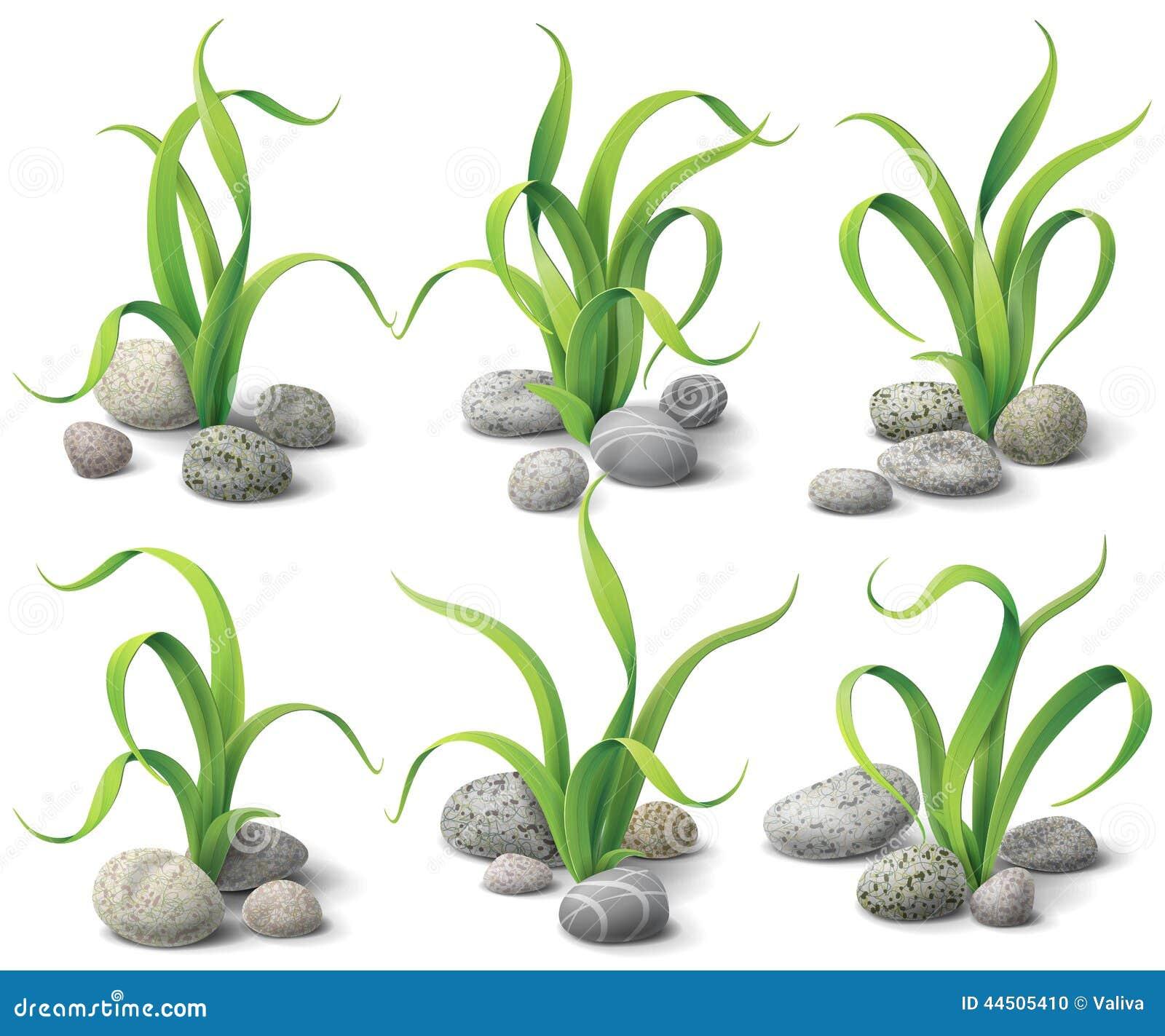 algen und steine eingestellt vektor abbildung bild 44505410. Black Bedroom Furniture Sets. Home Design Ideas