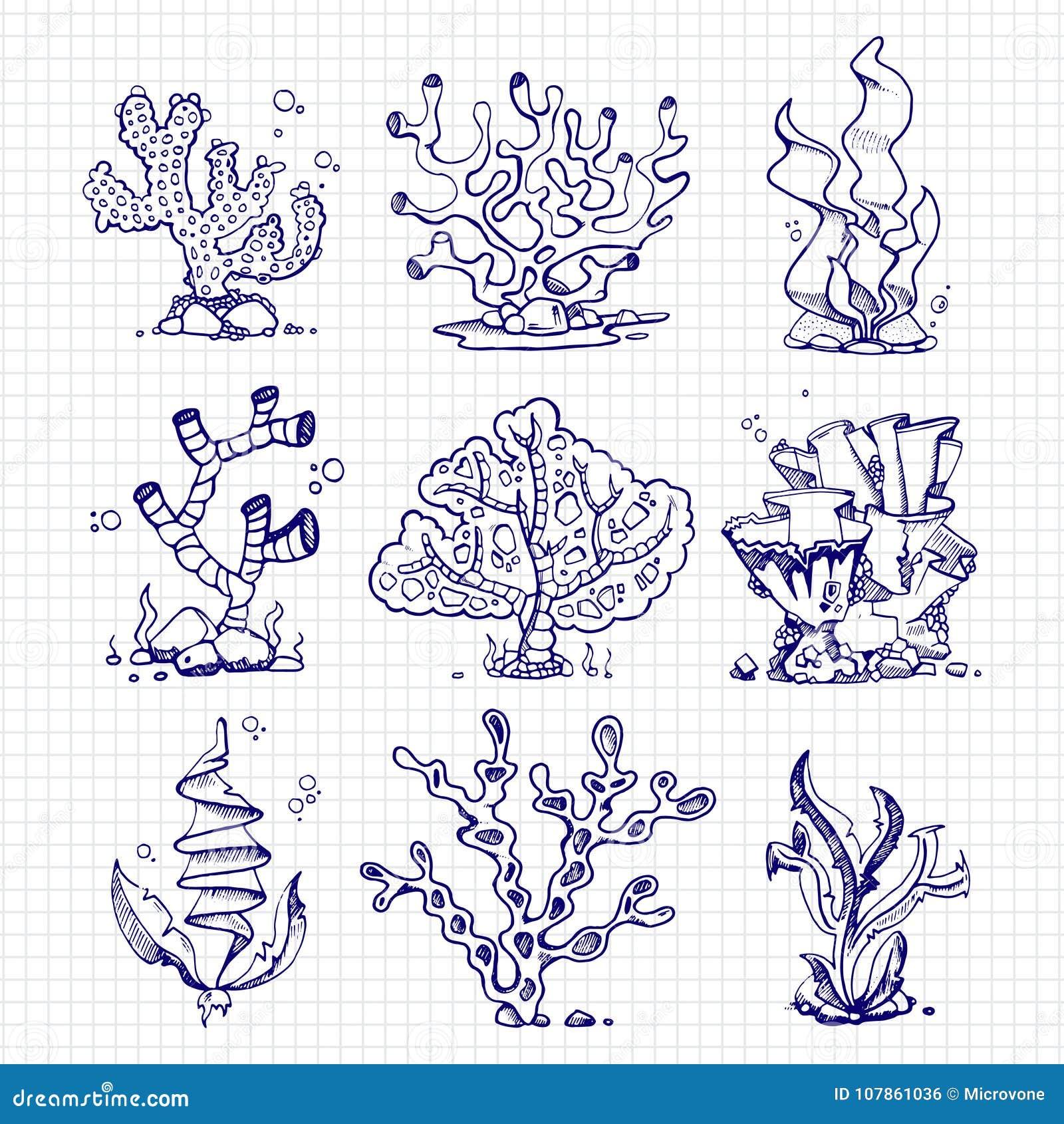 Alghe Del Disegno Della Penna A Sfera Coralli Piante Subacquee
