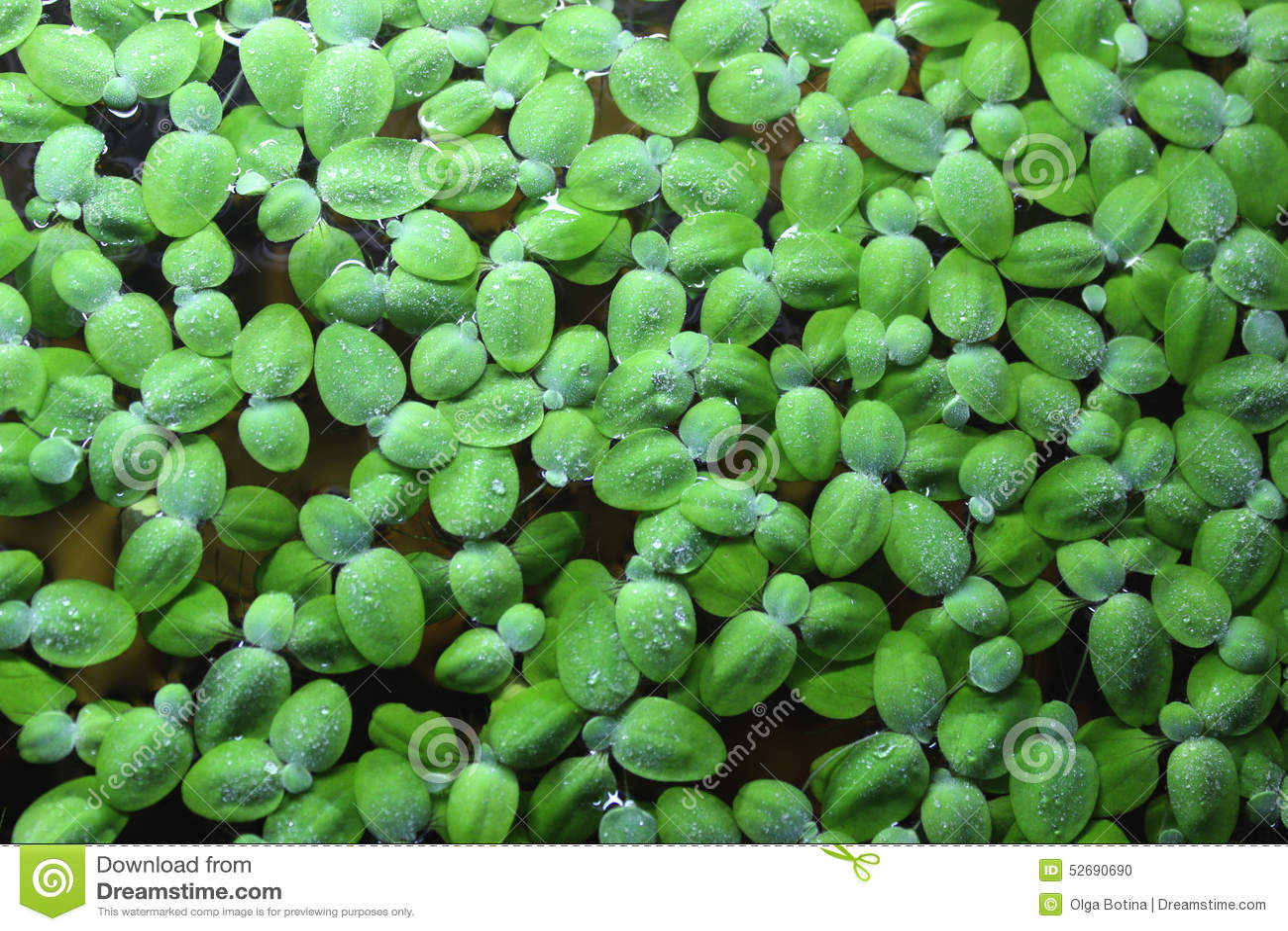 Algi tło