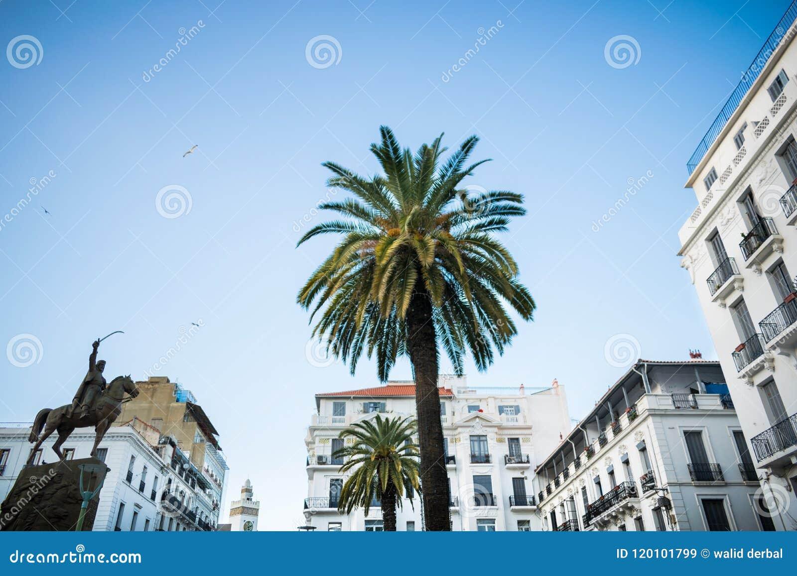 Palm tree in algiers city