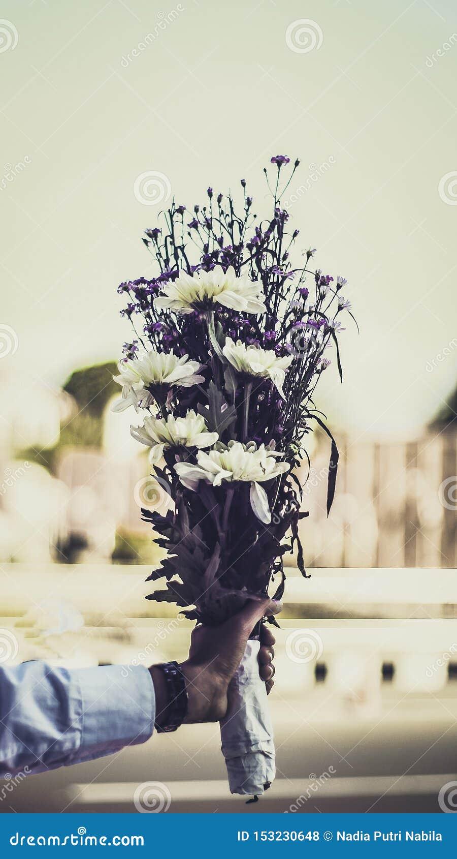 Alguien que sostiene un ramo de flor de la margarita blanca para una sorpresa