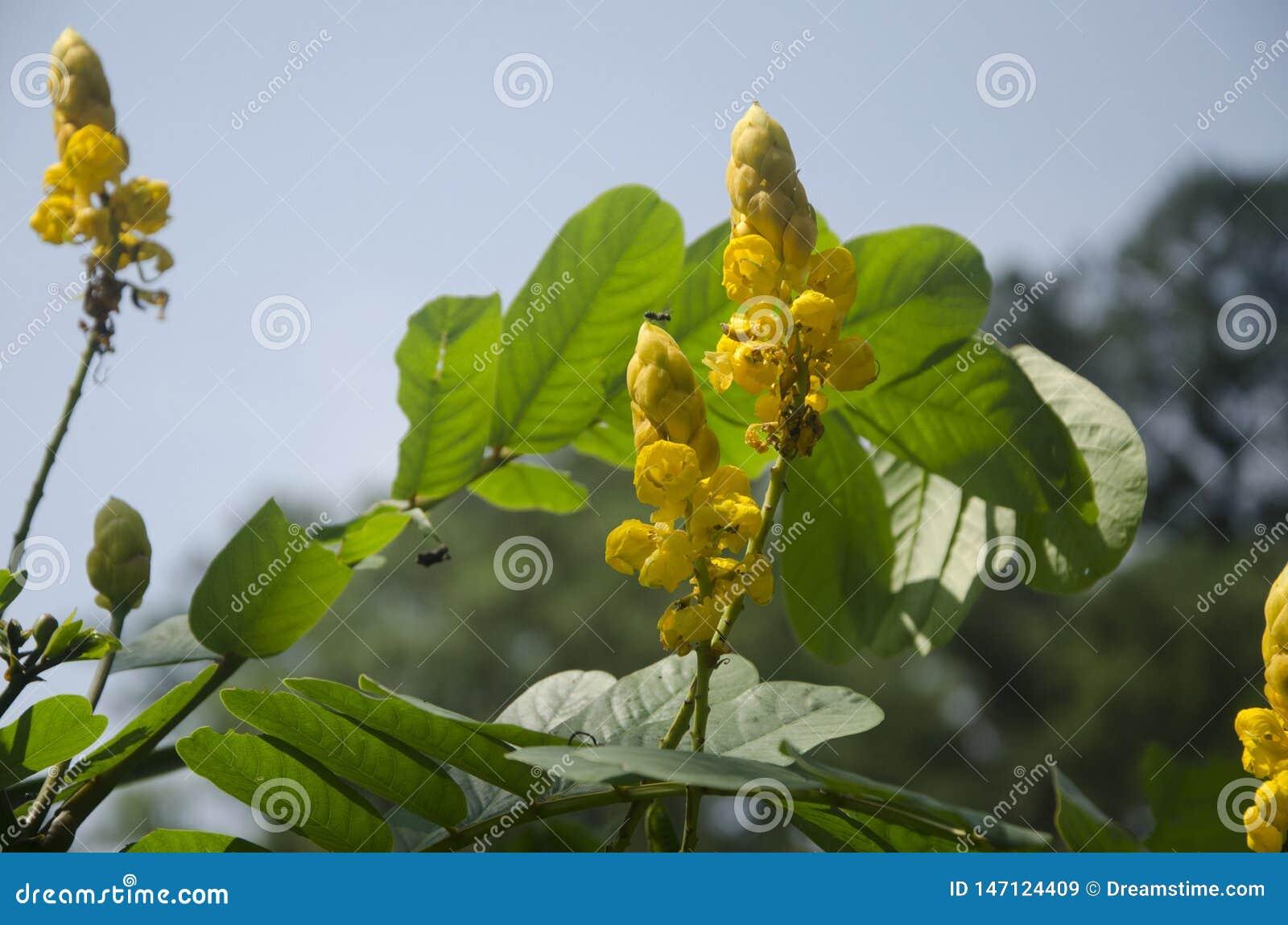 Alguns grupos de flores amarelas