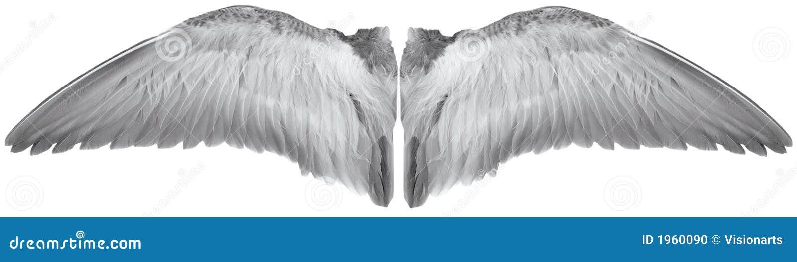 White birds wings