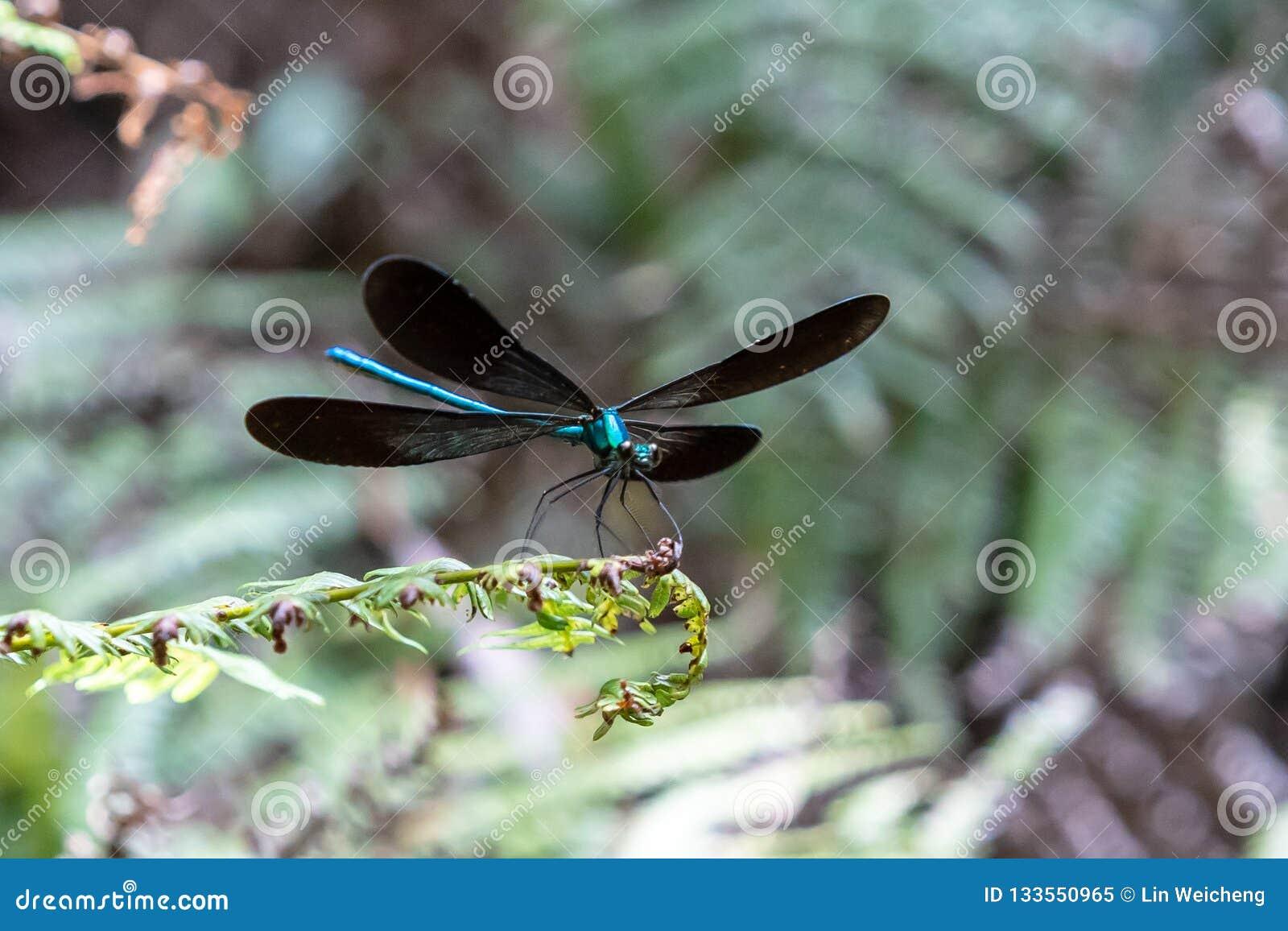 Ali della libellula su una foglia