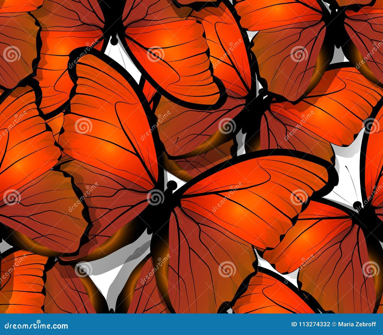 Ali senza cuciture del modello di farfalla su bianco