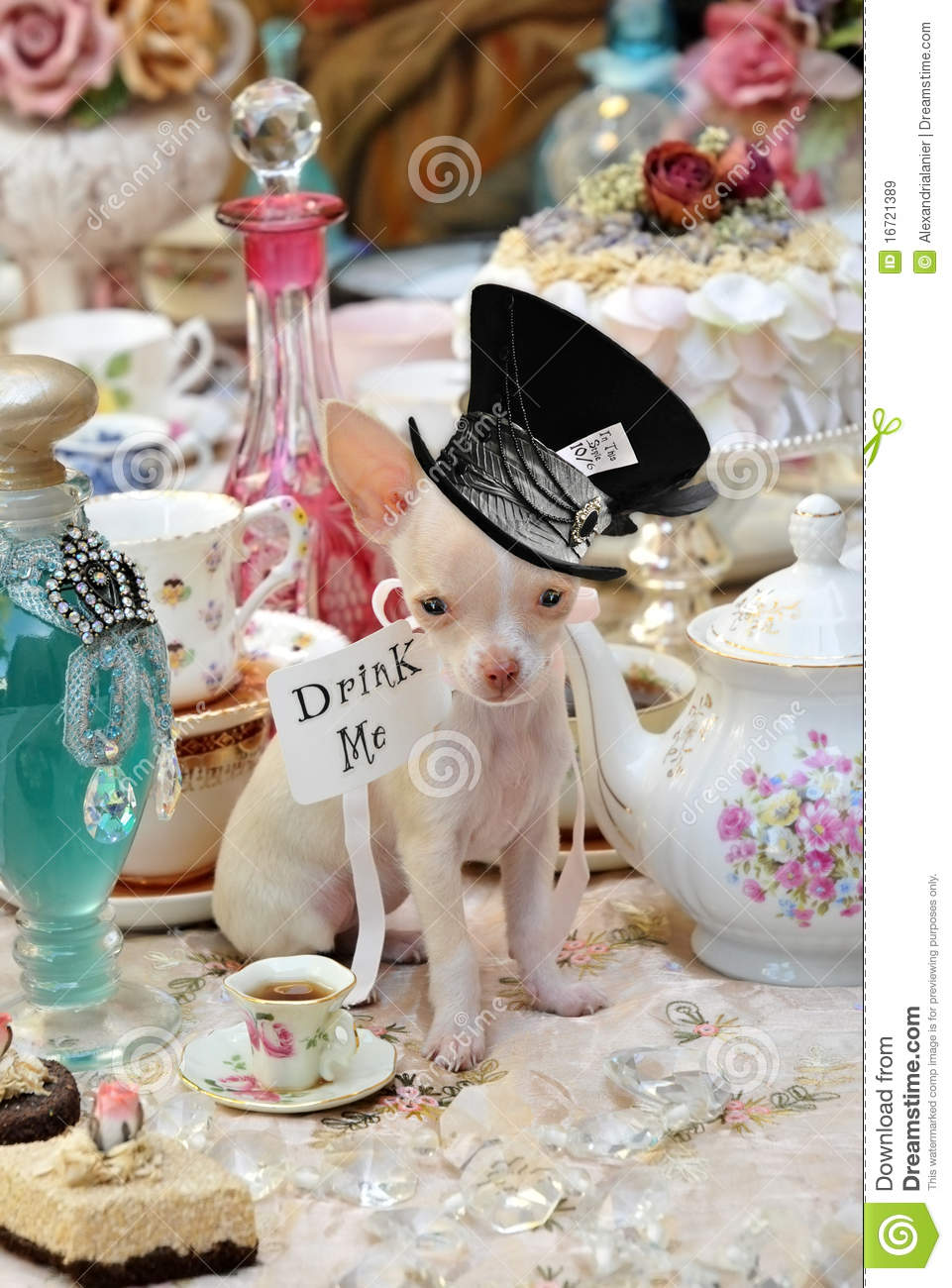 Alice In Wonderland Teaparty Chihuahua Stock Image Image