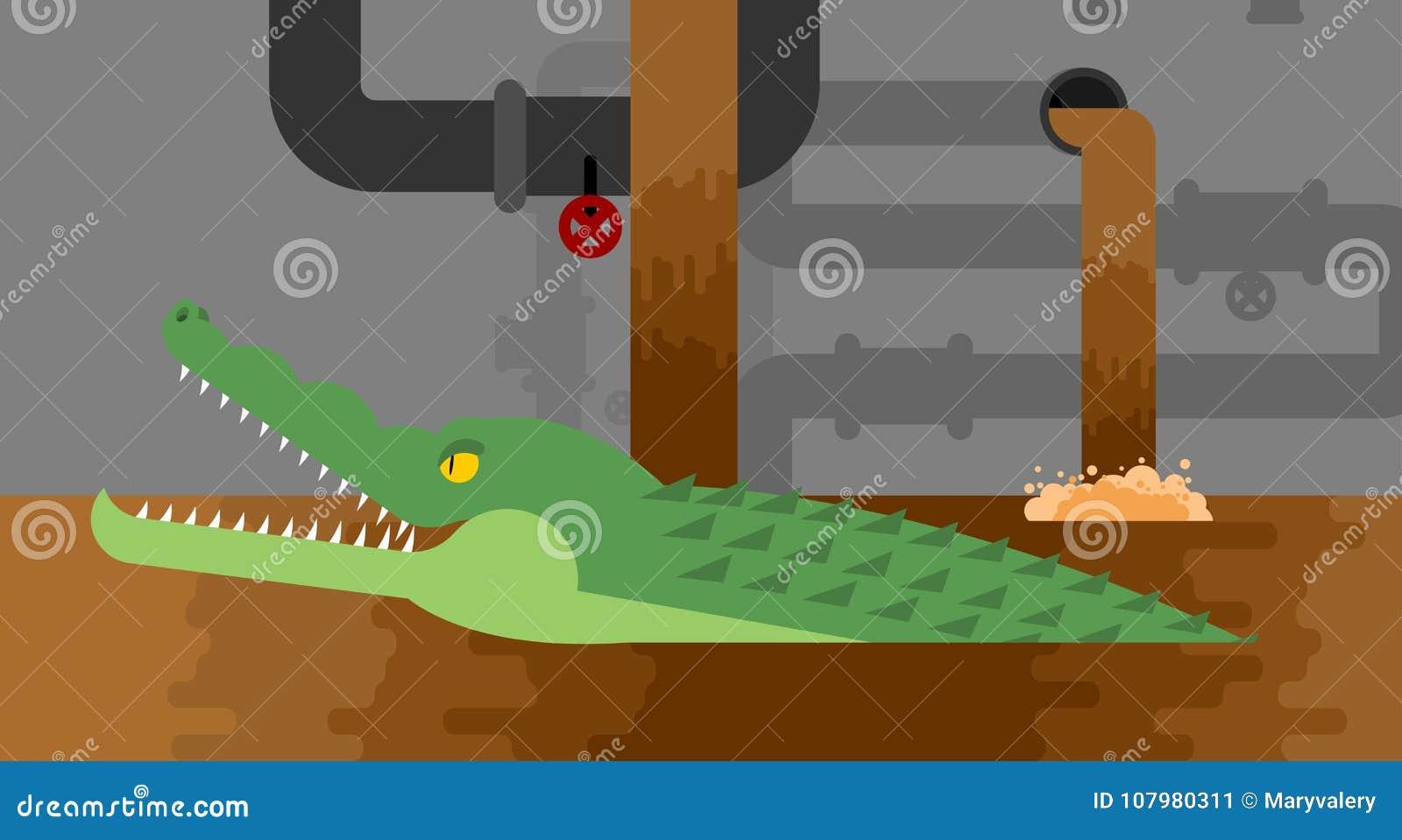 Aligator kanalizacja Krokodyl w kanale ściekowym drapieżnika zwierzę Miasto le