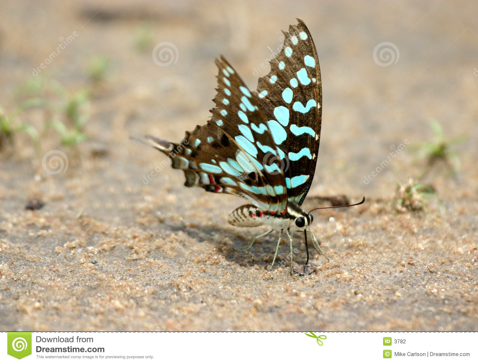 Alimentação da borboleta