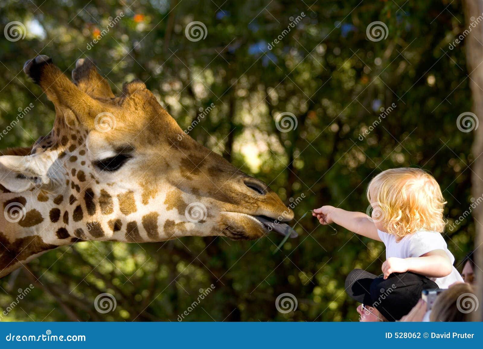 Alimentação de crianças um Giraffe