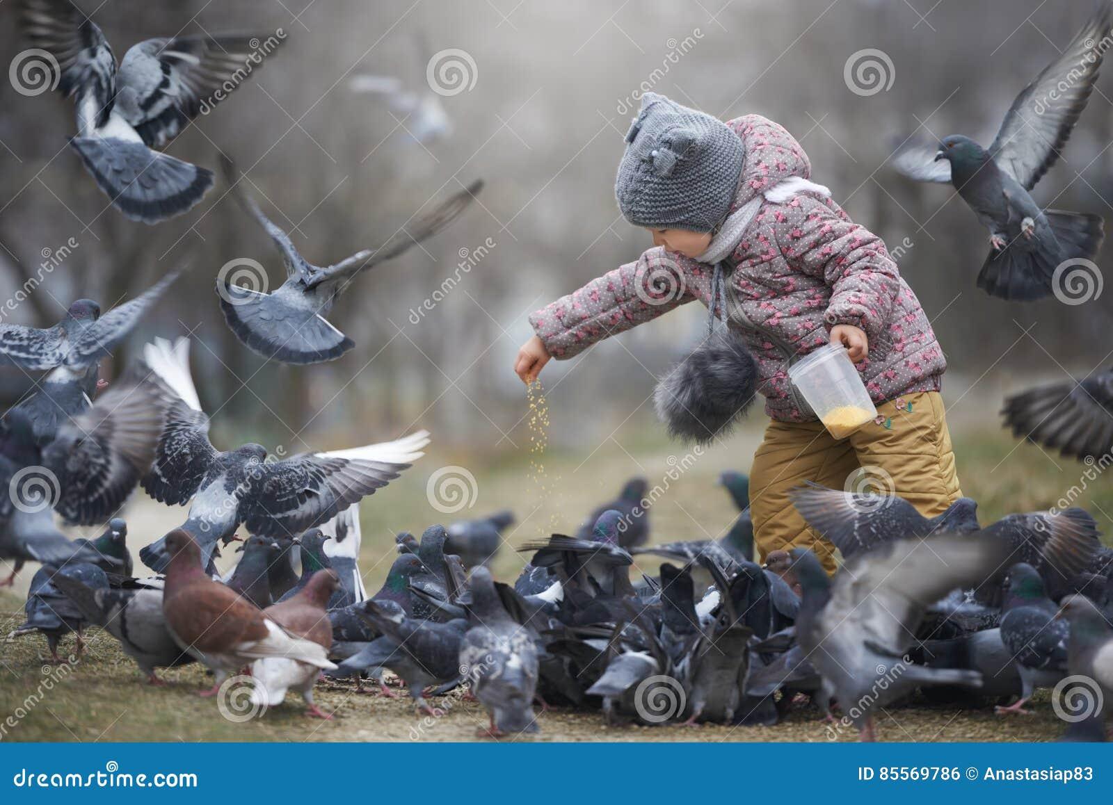 Alimentação de crianças uma multidão de cinza e dois pombos marrons