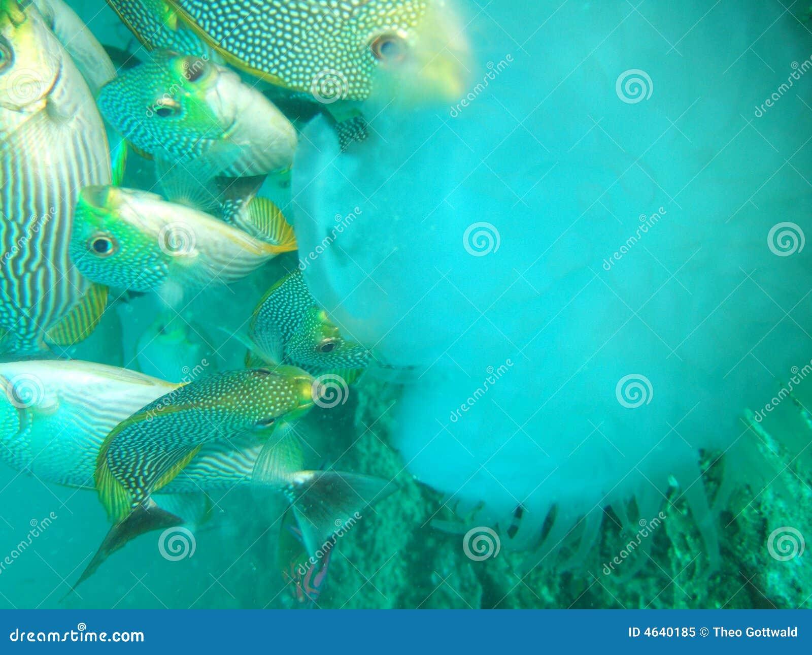 Alimentação de peixes marinhos