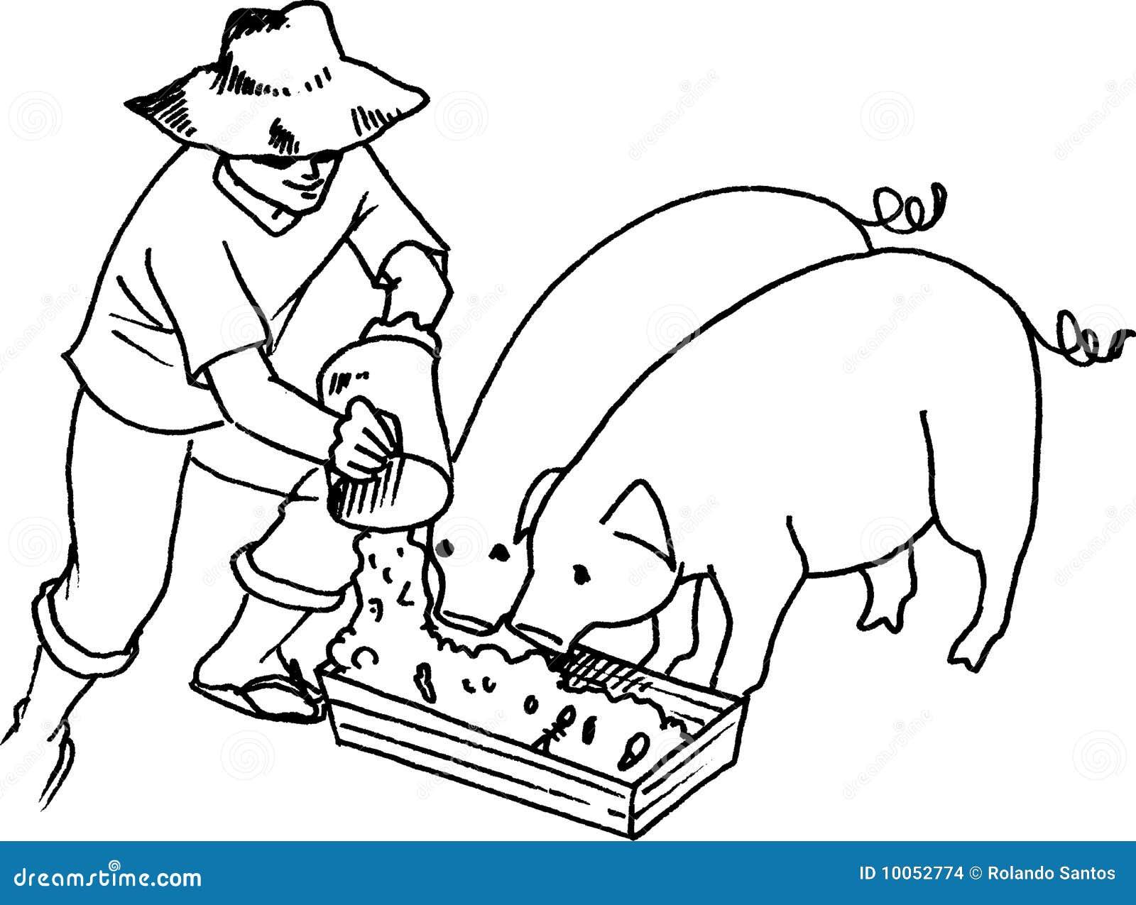 Alimentação do porco