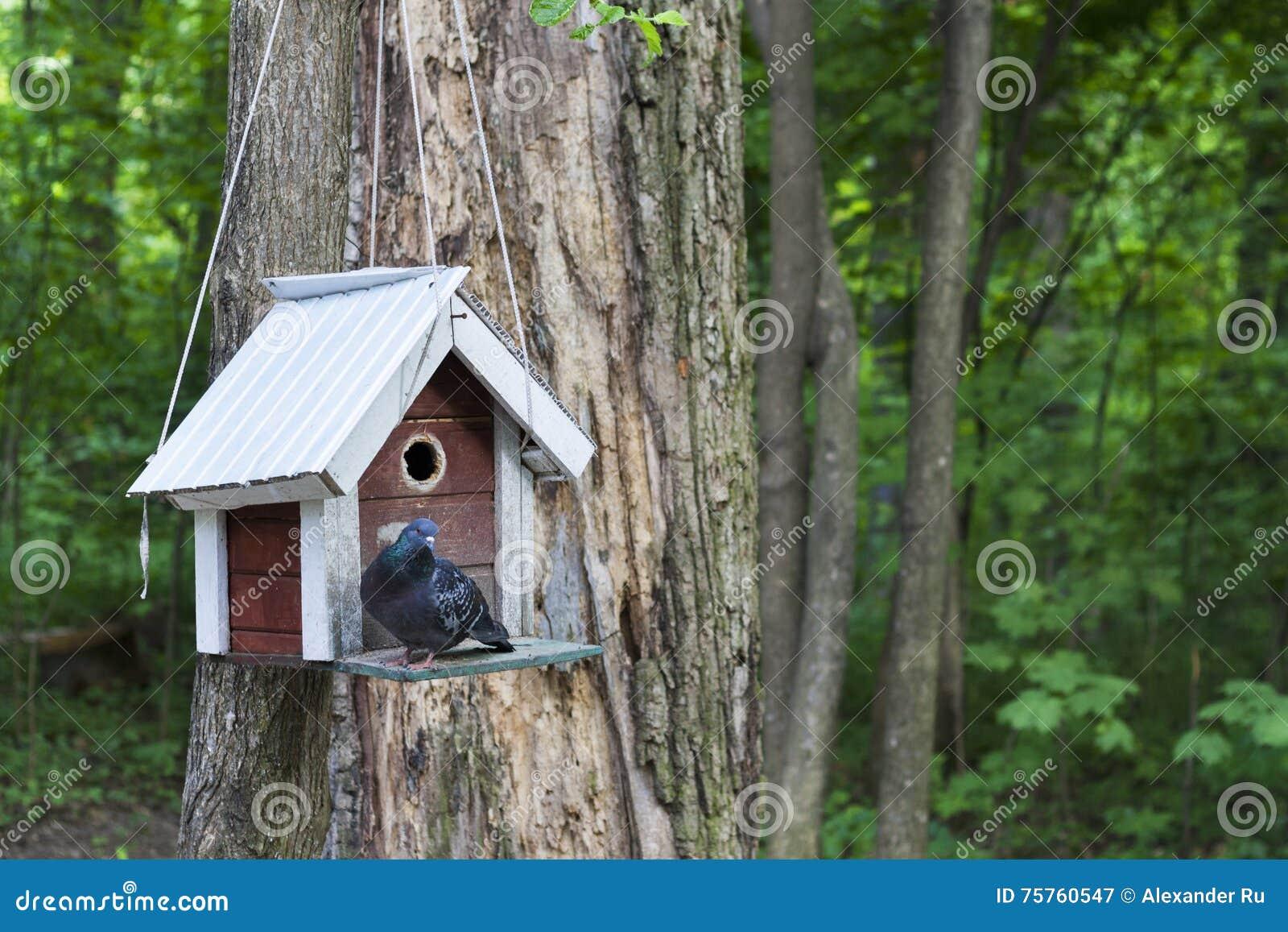 Alimentador, aviário em uma árvore nas madeiras ou parque
