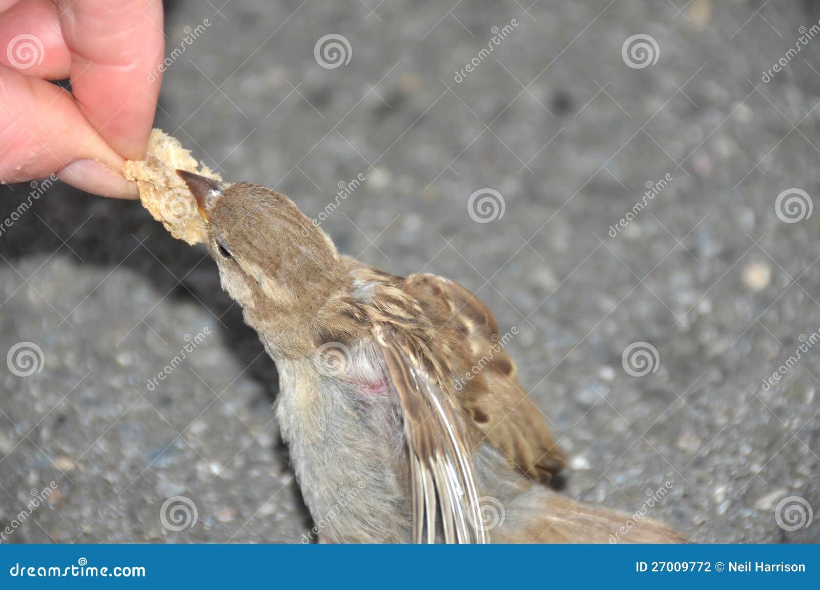 Alimentando os pardais