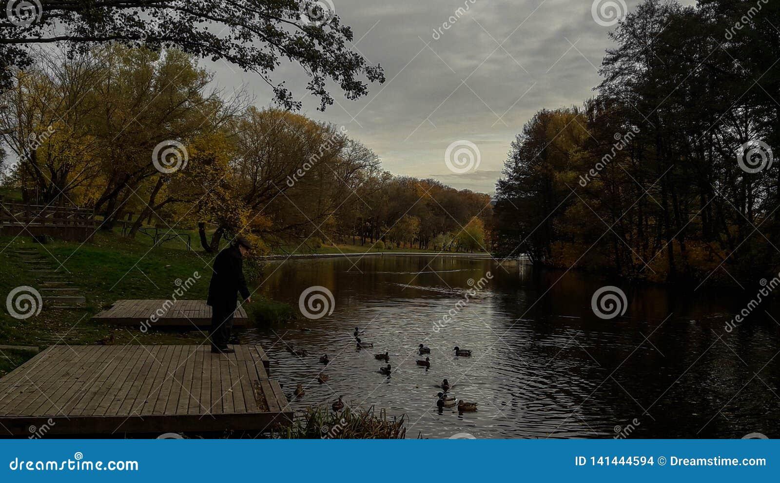 Alimentando os patos