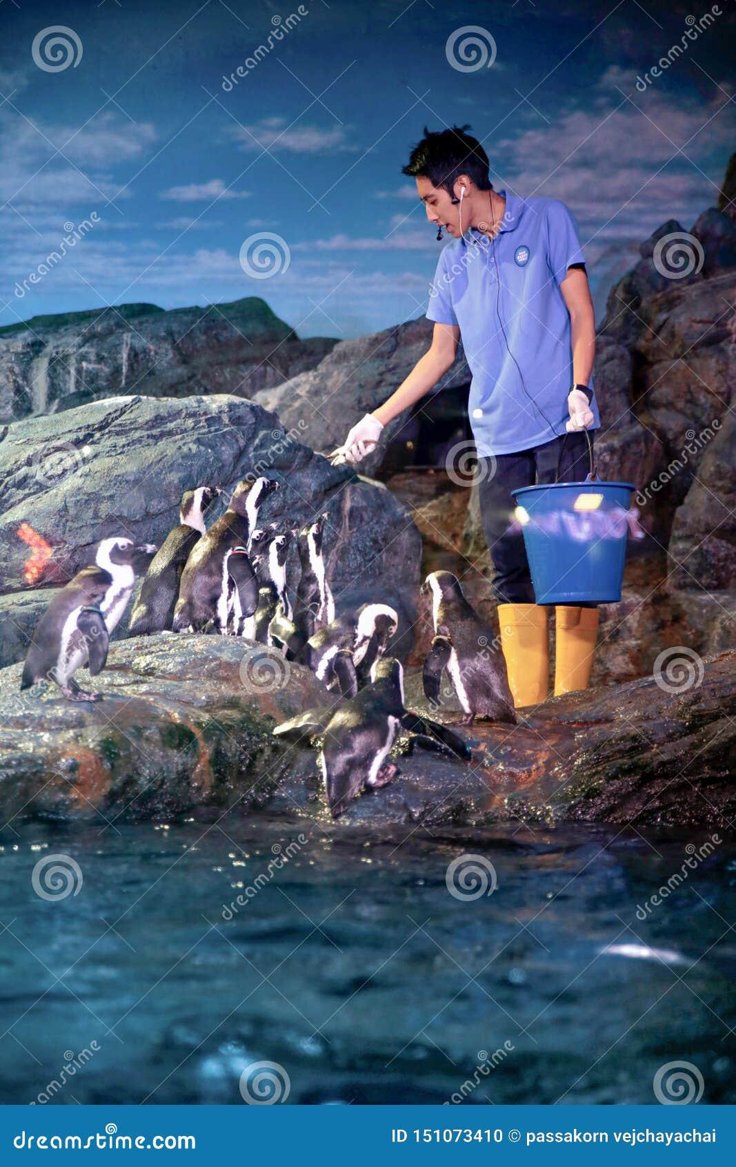 Alimentation de pingouin