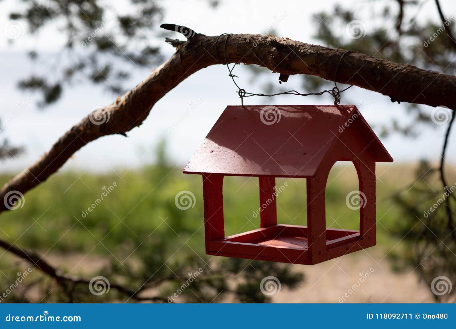 Alimentatore di legno rosso dell uccello